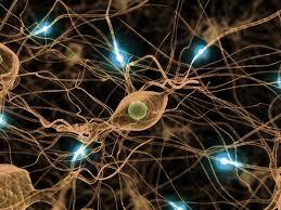 hjerneceller