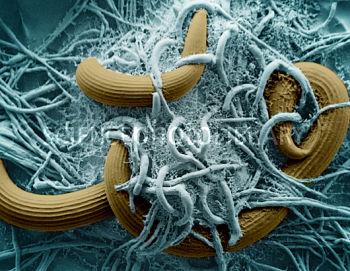Naturlig forekommende nanopartikler fra sopp har potensiale for kreftbehandling