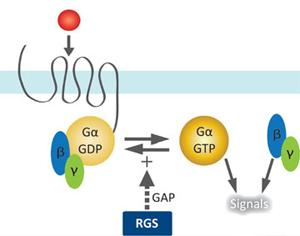 Blærekreftrisiko koblet til genetiske endringer i RGS-gener