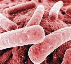 Når vi mister antibiotikaen mister vi mye annet også